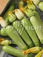 Zucchino amalthee A-2498