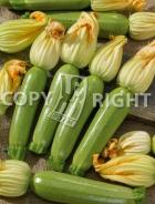 Zucchino alexander A-2503