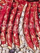 Fagiolo nano big baldoria 091