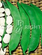 Fagiolo di spagna a fiore bianco 193