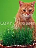 Erba per gatti 40-1282