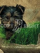 Erba per cani 40-1382