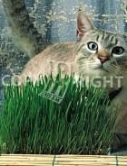 Erba per gatti 40-1384