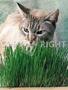 Erba per gatti 40-1385