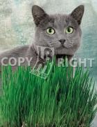 Erba per gatti 40-1458