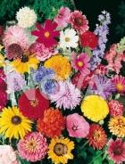Miscuglio di fiori annuali 606008
