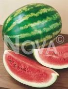 Anguria crimson sweet 706760