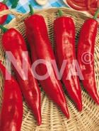 Peperone corno di toro rosso 708106