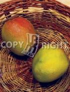 Mango MN512