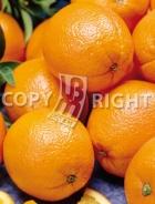 Arancio AG491