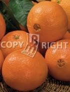 Arancio AG493