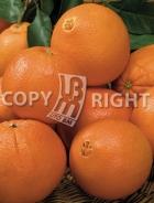 Arancio AG494