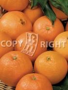 Arancio AG496