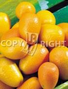 Mandarino cinese AG39