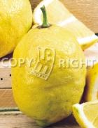 Limone AG163