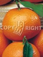 Mandarino AG38