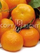 Mandarino AG503