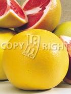 Pompelmo rosa AG198