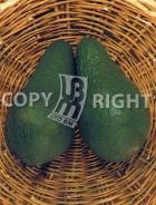 Avocado AV507