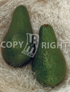 Avocado AV509