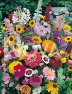 Miscuglio di fiori annuali 935300