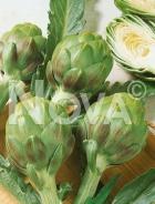 Carciofo green globe 940008