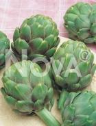 Carciofo green globe 940009
