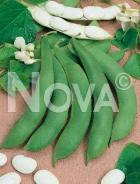 Fagiolo di spagna a fiore bianco 940464
