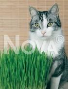 Erba per gatti 944377