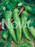 Peperone friariello 945851