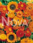 Miscuglio di fiori arancio G4500047
