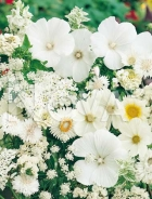 Miscuglio di fiori bianchi G4500048