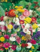 Miscuglio per fiori secchi G4500725