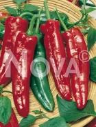 Peperone corno di toro rosso G4700500