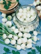 Cipolla blanca barletta G4701089