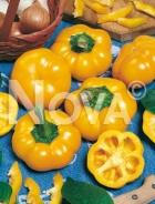 Peperone giallo botinecka G4701276