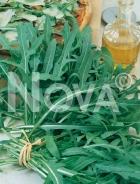 Rucola selvatica G4701539