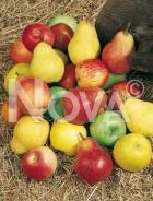 Frutti N0700090