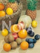 Frutti N0700098