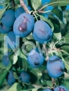 Bluefre N0700180