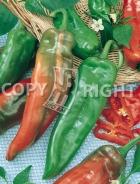 Peperone corno di toro rosso N1700701-R