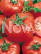 Pomodoro ace 55 vf N1701117