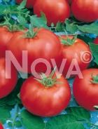 Pomodoro ace 55 vf N1701938