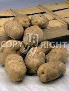 Patata bianca P005