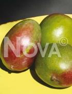 Mango RAM 055
