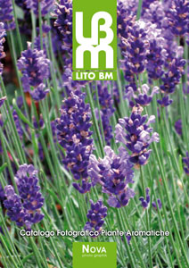 Browse online theCatalog Plante Aromatice
