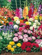 Bulbi da fiore