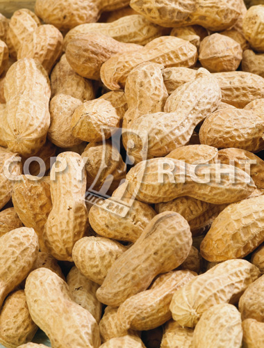 arachide_nuts_arachis hypogaea