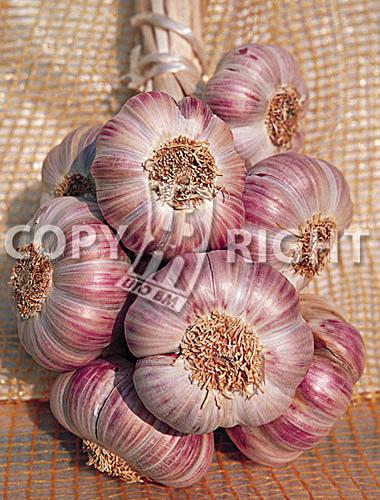 aglio rosato