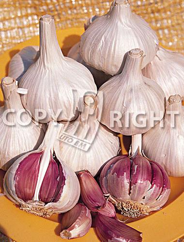 aglio violetto